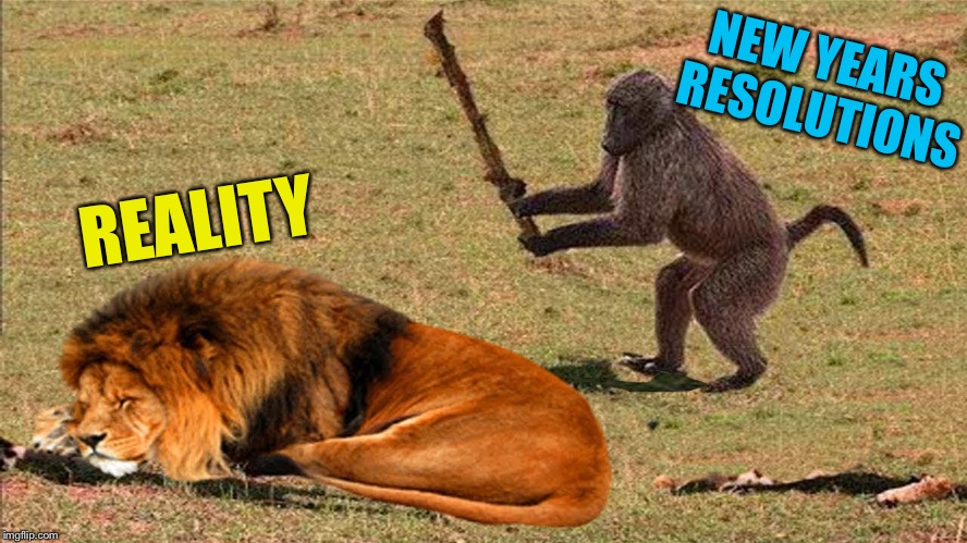 Don't be a silly monkey | NEW YEARS RESOLUTIONS REALITY | image tagged in new years resolutions,drunk monkey,lion,funny memes | made w/ Imgflip meme maker