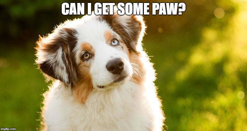 CAN I GET SOME PAW? | made w/ Imgflip meme maker