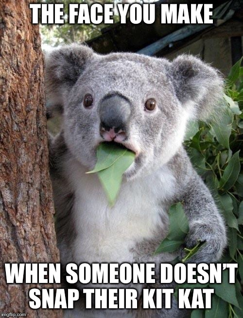 Suprised Koala | THE FACE YOU MAKE WHEN SOMEONE DOESN'T SNAP THEIR KIT KAT | image tagged in suprised koala | made w/ Imgflip meme maker