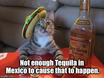 tequila cat | Not enough Tequila in Mexico to cause that to happen. | image tagged in tequila cat | made w/ Imgflip meme maker