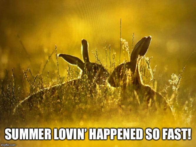 Tell me more!  Tell me more! | SUMMER LOVIN' HAPPENED SO FAST! | image tagged in summer,rabbits | made w/ Imgflip meme maker