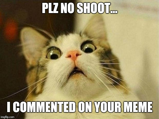 Scared Cat Meme | PLZ NO SHOOT... I COMMENTED ON YOUR MEME | image tagged in memes,scared cat | made w/ Imgflip meme maker