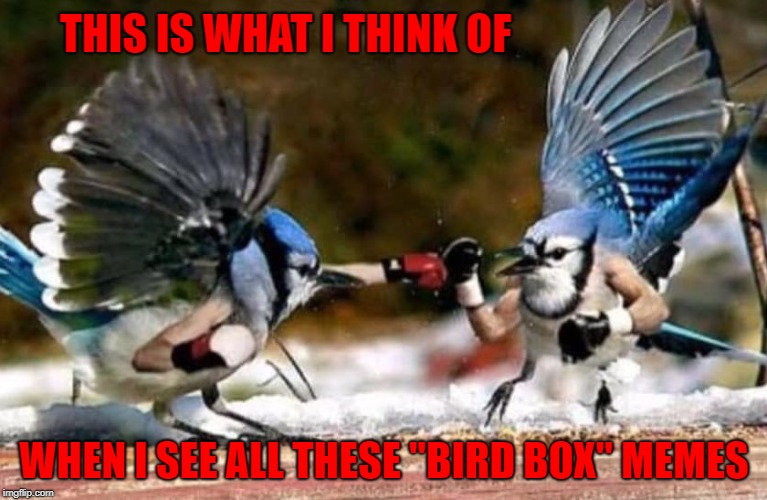 "I don't even know what this ""bird box"" is all about and at this point I'm afraid to ask!!! 