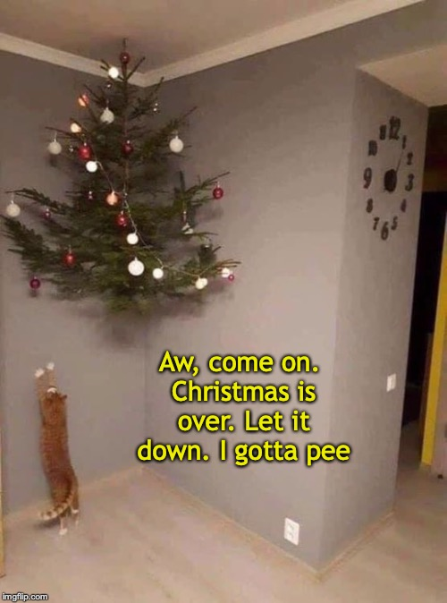 Glad when the holiday is over | Aw, come on. Christmas is over. Let it down. I gotta pee | image tagged in cats,christmas tree | made w/ Imgflip meme maker