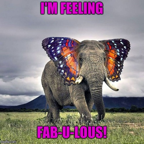 Sometimes You Just Have To Let Yourself Go | I'M FEELING FAB-U-LOUS! | image tagged in elephant,butterfly | made w/ Imgflip meme maker