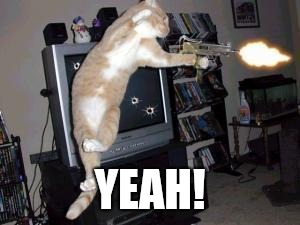 Gun cat | YEAH! | image tagged in gun cat | made w/ Imgflip meme maker