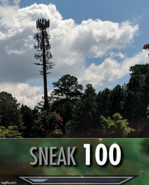 This is one tall tree. | image tagged in sneak 100 | made w/ Imgflip meme maker