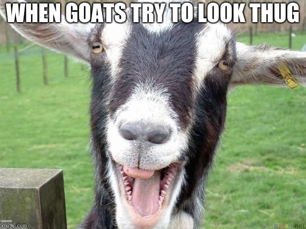 Funny Goat | WHEN GOATS TRY TO LOOK THUG | image tagged in funny goat | made w/ Imgflip meme maker