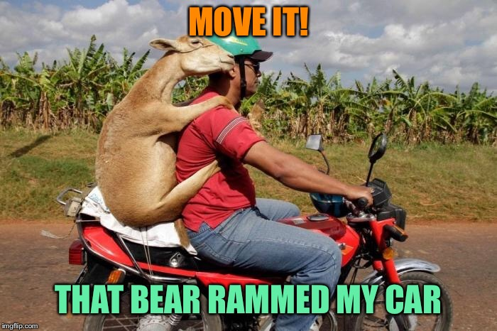 MOVE IT! THAT BEAR RAMMED MY CAR | made w/ Imgflip meme maker