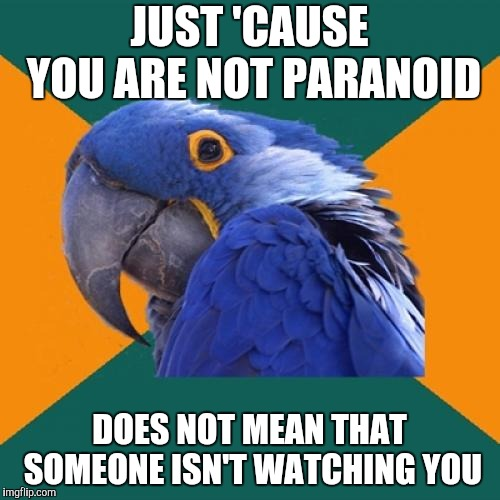 Paranoid Parrot Meme | JUST 'CAUSE YOU ARE NOT PARANOID DOES NOT MEAN THAT SOMEONE ISN'T WATCHING YOU | image tagged in memes,paranoid parrot | made w/ Imgflip meme maker