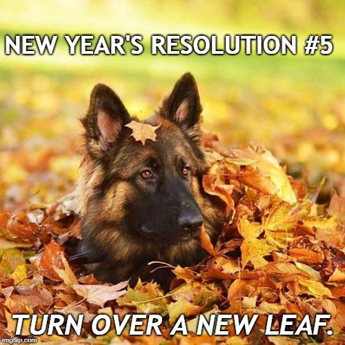 New Years Resolution Pet | NEW YEAR'S RESOLUTION #5 TURN OVER A NEW LEAF. | image tagged in dogs,new years resolutions,new years,pets | made w/ Imgflip meme maker