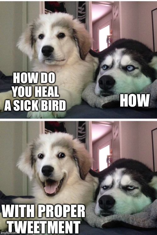 Bad pun dogs | HOW DO YOU HEAL A SICK BIRD WITH PROPER TWEETMENT HOW | image tagged in bad pun dogs | made w/ Imgflip meme maker
