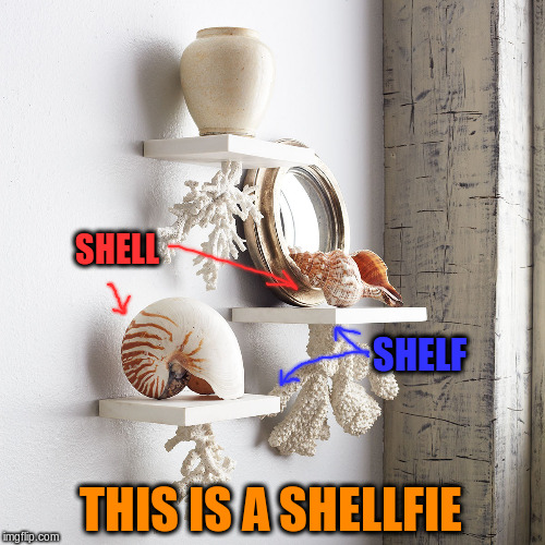 Bad Pun Furniture | SHELL SHELF THIS IS A SHELLFIE | image tagged in memes,selfie,shelf,shell | made w/ Imgflip meme maker