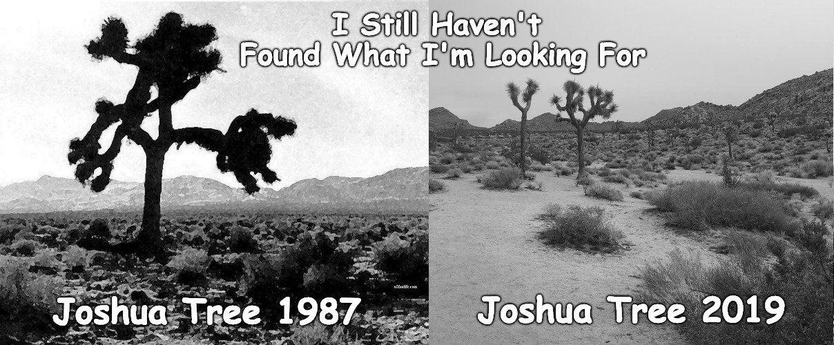 I Still Haven't Found What I'm Looking For... | Joshua Tree 1987 Joshua Tree 2019 I Still Haven't Found What I'm Looking For | image tagged in u2,joshua tree | made w/ Imgflip meme maker