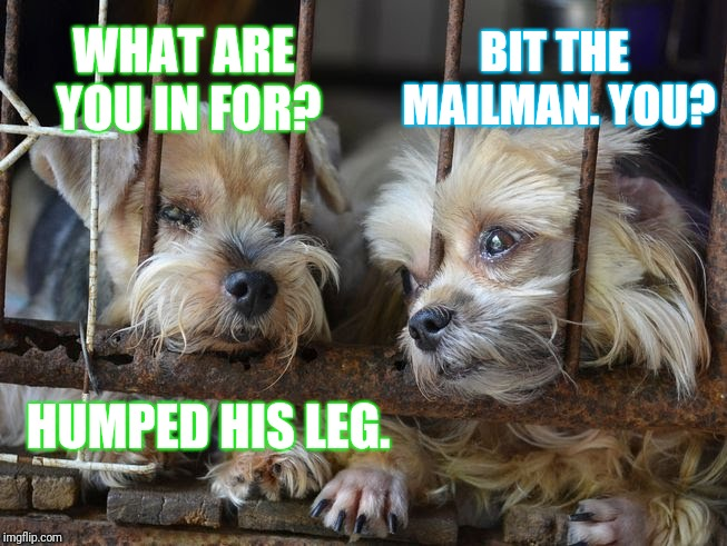 Nobody knows the kibble I've seen... | HUMPED HIS LEG. BIT THE MAILMAN. YOU? WHAT ARE YOU IN FOR? | image tagged in dogs in jail,memes,what are you in for,i killed a man and you,mailman | made w/ Imgflip meme maker