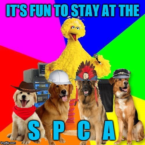 young dog...there's no need to feel down...  | IT'S FUN TO STAY AT THE S   P   C   A | image tagged in memes,wrong lyrics karaoke big bird,ymca,spca,getting the old band back together | made w/ Imgflip meme maker