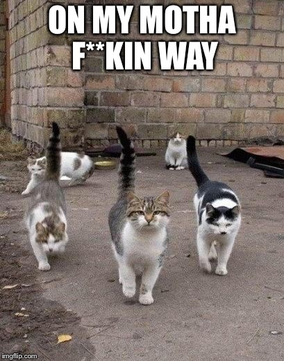 Alley Cats | ON MY MOTHA F**KIN WAY | image tagged in alley cats | made w/ Imgflip meme maker
