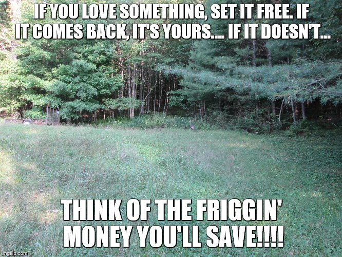 IF YOU LOVE SOMETHING, SET IT FREE. IF IT COMES BACK, IT'S YOURS.... IF IT DOESN'T... THINK OF THE FRIGGIN' MONEY YOU'LL SAVE!!!! | image tagged in divorce,love | made w/ Imgflip meme maker