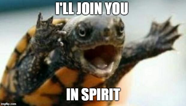 Turtle Say What? | I'LL JOIN YOU IN SPIRIT | image tagged in turtle say what | made w/ Imgflip meme maker