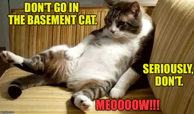 Teens, they never listen. | DON'T GO IN THE BASEMENT CAT. SERIOUSLY, DON'T. MEOOOOW!!! | image tagged in cats,fear and loathing cat,memes,funny | made w/ Imgflip meme maker