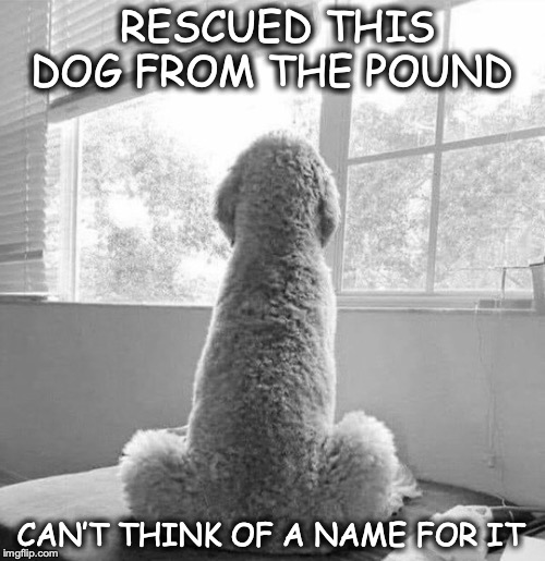 Please Help | RESCUED THIS DOG FROM THE POUND CAN'T THINK OF A NAME FOR IT | image tagged in dog meme,animal rescue,pound,prank | made w/ Imgflip meme maker