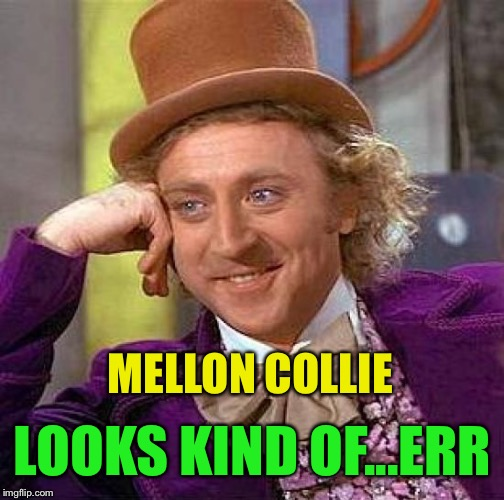 Creepy Condescending Wonka Meme | MELLON COLLIE LOOKS KIND OF...ERR | image tagged in memes,creepy condescending wonka | made w/ Imgflip meme maker