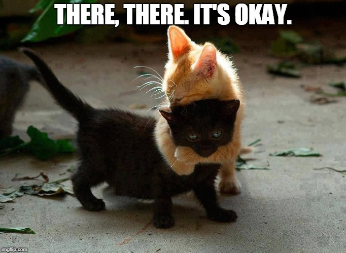kitten hug | THERE, THERE. IT'S OKAY. | image tagged in kitten hug | made w/ Imgflip meme maker