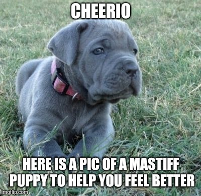 Cute Puppys Cure Suicides.  | CHEERIO HERE IS A PIC OF A MASTIFF PUPPY TO HELP YOU FEEL BETTER | image tagged in cute puppies,suicide,i know that feel bro | made w/ Imgflip meme maker