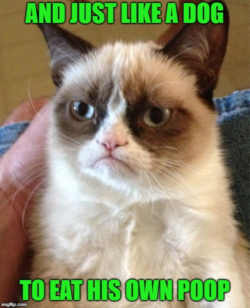 Grumpy Cat Meme | AND JUST LIKE A DOG TO EAT HIS OWN POOP | image tagged in memes,grumpy cat | made w/ Imgflip meme maker