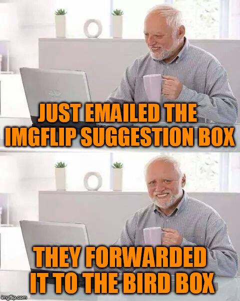 Hide the Pain Harold Meme | JUST EMAILED THE IMGFLIP SUGGESTION BOX THEY FORWARDED IT TO THE BIRD BOX | image tagged in memes,hide the pain harold | made w/ Imgflip meme maker