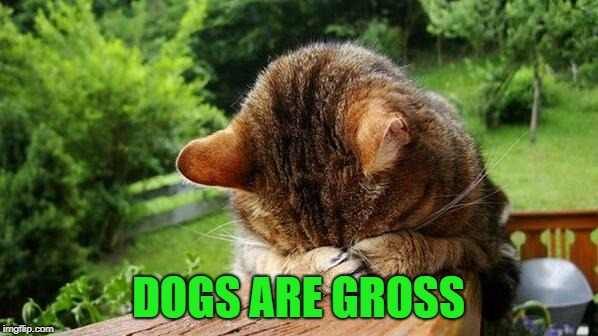 Embarrassed Cat | DOGS ARE GROSS | image tagged in embarrassed cat | made w/ Imgflip meme maker