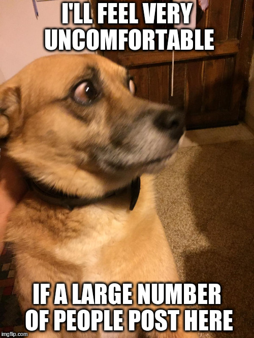 Unconfortablepuppy | I'LL FEEL VERY UNCOMFORTABLE IF A LARGE NUMBER OF PEOPLE POST HERE | image tagged in unconfortablepuppy | made w/ Imgflip meme maker