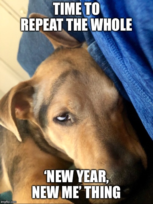 New year's resolution  | TIME TO REPEAT THE WHOLE 'NEW YEAR, NEW ME' THING | image tagged in memes,funny,funny dogs,happy new year,new year resolutions,instagram | made w/ Imgflip meme maker