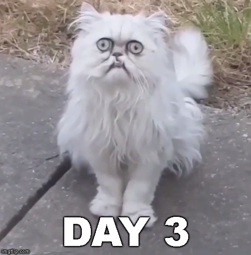 weird looking wilfried | DAY 3 | image tagged in weird looking wilfried | made w/ Imgflip meme maker