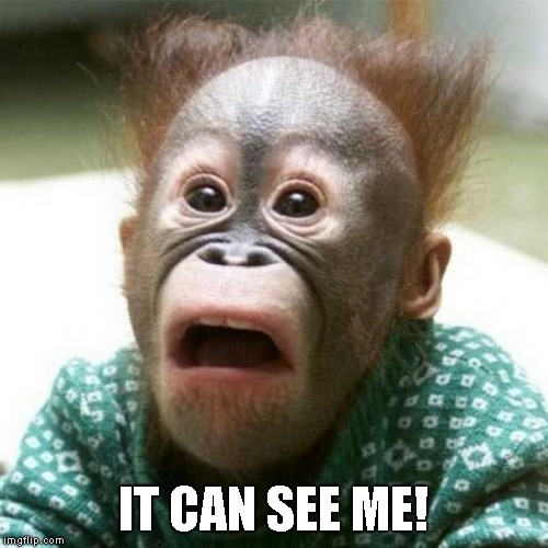 Shocked Monkey | IT CAN SEE ME! | image tagged in shocked monkey | made w/ Imgflip meme maker