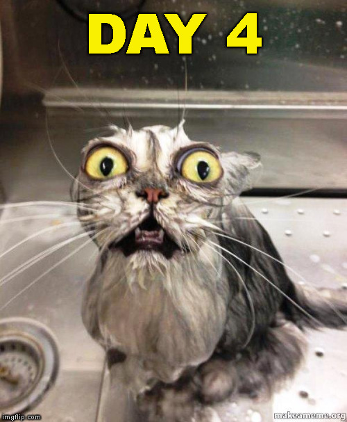 help me wet cat | DAY 4 | image tagged in help me wet cat | made w/ Imgflip meme maker