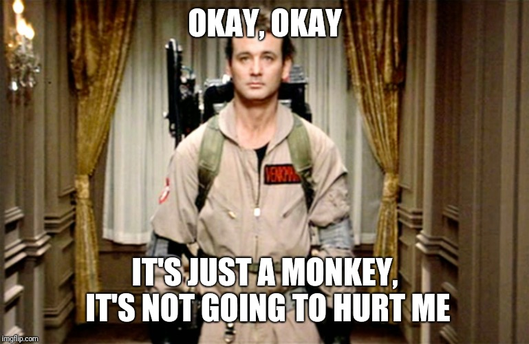 Bill Murray Ghostbusters | OKAY, OKAY IT'S JUST A MONKEY, IT'S NOT GOING TO HURT ME | image tagged in bill murray ghostbusters | made w/ Imgflip meme maker