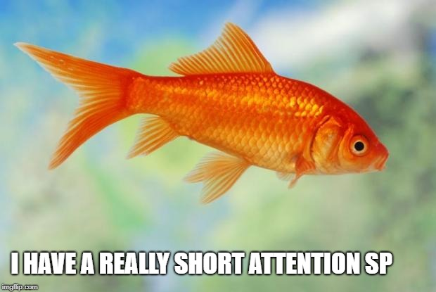 I HAVE A REALLY SHORT ATTENTION SP | image tagged in goldfish of purity | made w/ Imgflip meme maker