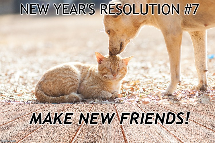 New Years Resolution Pet | NEW YEAR'S RESOLUTION #7 MAKE NEW FRIENDS! | image tagged in dogs,cats,new years resolutions,resolution | made w/ Imgflip meme maker