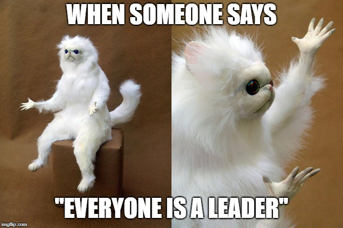 "Persian Cat Room Guardian | WHEN SOMEONE SAYS ""EVERYONE IS A LEADER"" 