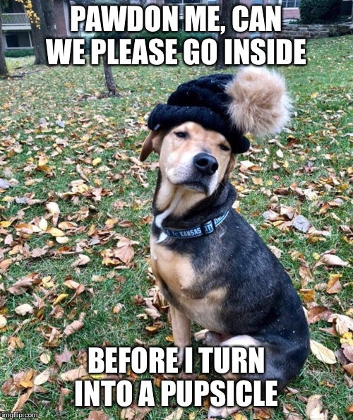 Pupsicle  | PAWDON ME, CAN WE PLEASE GO INSIDE BEFORE I TURN INTO A PUPSICLE | image tagged in winter,dog,dog meme,funny meme,funny dog memes,play on words | made w/ Imgflip meme maker