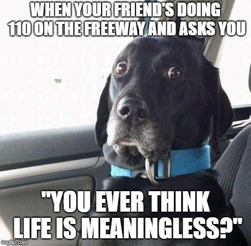 dark humor | WHEN YOUR FRIEND'S DOING 110 ON THE FREEWAY AND ASKS YOU ''YOU EVER THINK LIFE IS MEANINGLESS?'' | image tagged in dark humor,memes,dank memes,surprised dog | made w/ Imgflip meme maker
