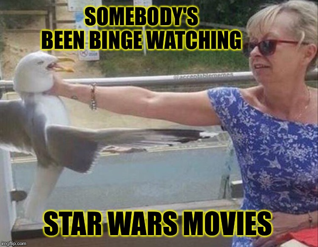 I find your squawking annoying. | SOMEBODY'S BEEN BINGE WATCHING STAR WARS MOVIES | image tagged in seagull,star wars,memes,funny | made w/ Imgflip meme maker