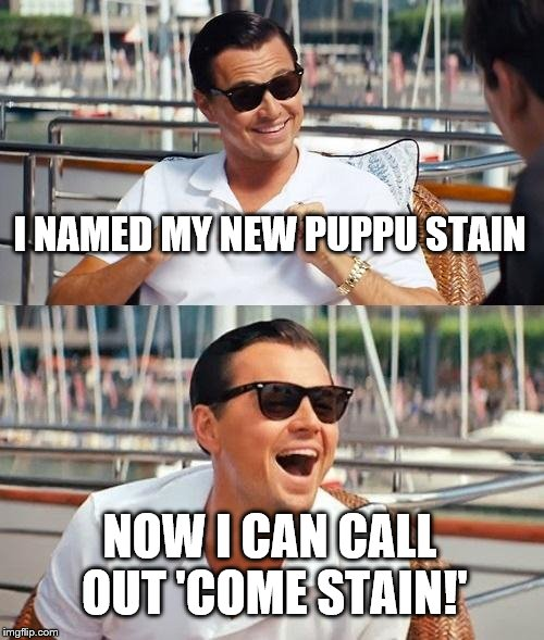 Leonardo Dicaprio Wolf Of Wall Street Meme | I NAMED MY NEW PUPPU STAIN NOW I CAN CALL OUT 'COME STAIN!' | image tagged in memes,leonardo dicaprio wolf of wall street | made w/ Imgflip meme maker
