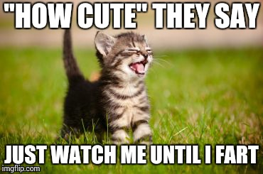 "cute cat | ""HOW CUTE"" THEY SAY JUST WATCH ME UNTIL I FART 