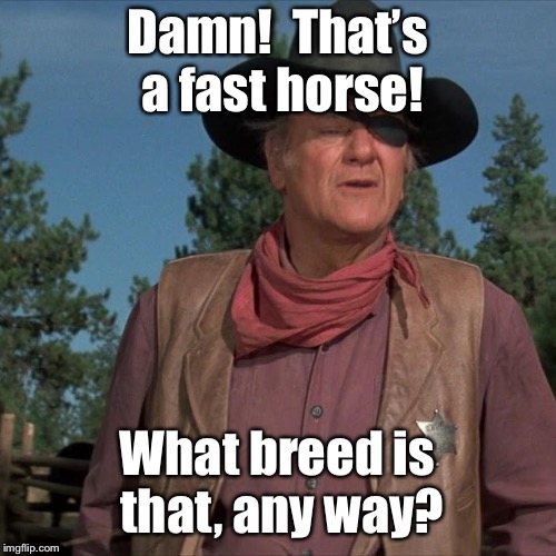 Damn!  That's a fast horse! What breed is that, any way? | made w/ Imgflip meme maker