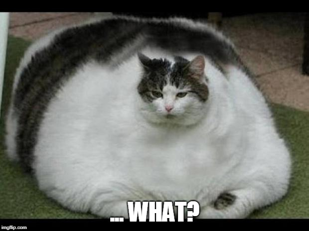 fat cat 2 | ... WHAT? | image tagged in fat cat 2 | made w/ Imgflip meme maker