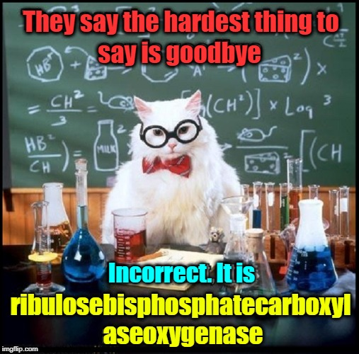 I don't know why you say goodbye, I say hello | They say the hardest thing to say is goodbye Incorrect. It is ribulosebisphosphatecarboxyl aseoxygenase | image tagged in vince vance,chemistry cat,you say hello,i say goodbye,the beatles,you say yes i say no | made w/ Imgflip meme maker