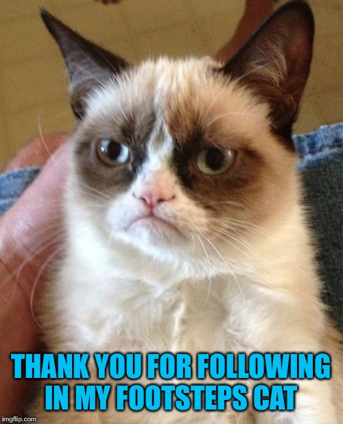 Grumpy Cat Meme | THANK YOU FOR FOLLOWING IN MY FOOTSTEPS CAT | image tagged in memes,grumpy cat | made w/ Imgflip meme maker