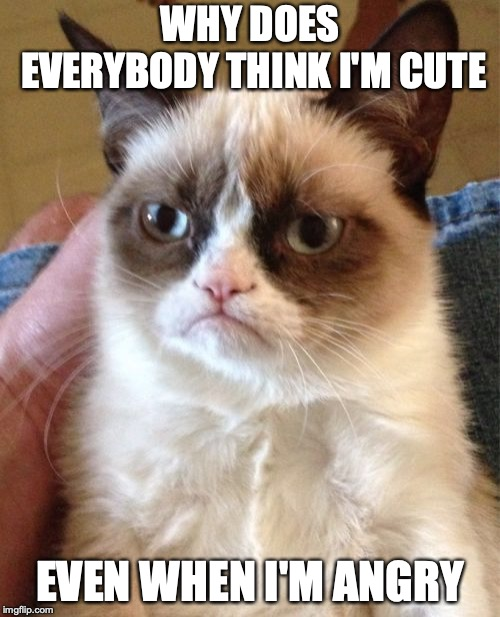 Grumpy Cat Meme | WHY DOES EVERYBODY THINK I'M CUTE EVEN WHEN I'M ANGRY | image tagged in memes,grumpy cat | made w/ Imgflip meme maker